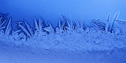 Frost Photo Prints - Frost Forest Print by Thomas R Fletcher