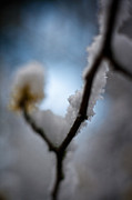 Winter Abstract Prints - Frost Light Print by Mike Reid