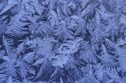 Ice Crystals Posters - Frost On A Window Poster by Richard Nowitz