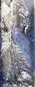 Frost Owl Print by Greta Thorsdottir