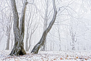 Balkan Mountains Photos - Frostbitten Forest by Evgeni Dinev