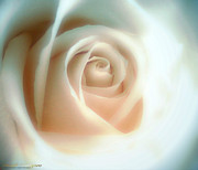 Beige Glass Digital Art - Frosted Glass Rose by Michelle Frizzell-Thompson