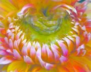 Photograph Of Dahlia Prints - Frosted Print by Gwyn Newcombe