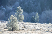 Frost Photos - Frosted Morning by Donna Blackhall