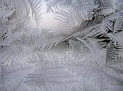Frost Photos - Frosted Pane by Rhonda Barrett