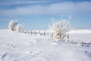 Winter Landscape Photos - Frosty Day by Julie Lueders