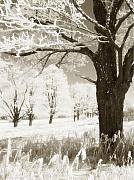 Frost Photo Originals - Frosty Maples II by John  Bartosik