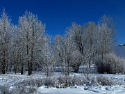 Frost Photos - Frosty Trees by Andrea Arnold