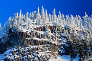 Snowshoe Posters - Frosty Trees Poster by Inge Johnsson