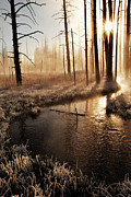 Cold Morning Sun Prints - Frosty Yellowstone Morning Print by by Adam Christensen