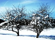 Snowstorm Art - Frozen Apples by Toni Jackson