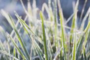 Ground Level View Framed Prints - Frozen Blades Of Grass Framed Print by Craig Tuttle