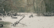 Branches Prints - Frozen Fallen Wide Print by Andy Smy