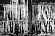 Barbed Wire Fence Framed Prints - Frozen fence Framed Print by David Lee Thompson