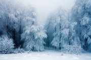 Balkan Prints - Frozen Forest Print by Evgeni Dinev