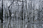 Woods Photos - Frozen Landscape 3 by Travis Garwood