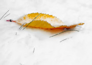 Snow Abstract Posters - Frozen Leaf Poster by Svetlana Sewell