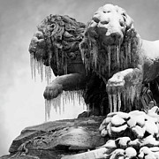 Cold Temperature Art - Frozen Lions by Fotografias de Rodolfo Velasco