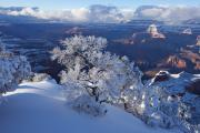 South Rim Prints - Frozen Pine Print by Mike Buchheit