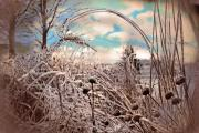 Gina Signore Digital Art - Frozen prairie by Gina Signore