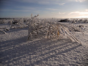 See Fog Photos - Frozen Riviere des Mille Iles - QC by Juergen Weiss