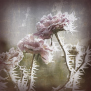 Stems Mixed Media - Frozen Roses by Bonnie Bruno