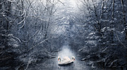 Swans Art - Frozen Time by Svetlana Sewell