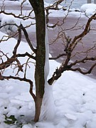 Pictures Photo Originals - Frozen Tree by Sunil Bhardwaj