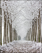 In A Row Art - Frozen Trees by Beppeverge