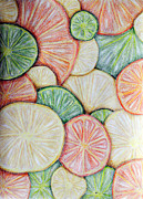 Oranges Drawings - Fruit Design by Kayla Nicole