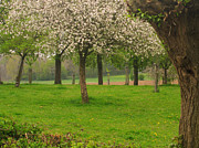Limburg Photo Prints - Fruit meadow in Beek Print by Nop Briex