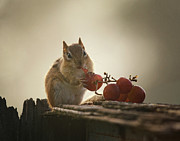 Eastern Chipmunk Photos - Fruit of the Vine by Susan Capuano