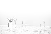 Cold Temperature Art - Fruit Trees Lost In Winter Fog by Raphael Schneider