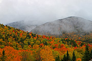 Saco Prints - Fruits Loops in Crawford Notch Print by Lloyd Alexander