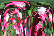 Russel Ray Posters - Fuchsia 1 Dripper Poster by Russel Ray