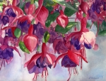 Close Up Painting Posters - Fuchsia Frenzy Poster by Lynne Reichhart