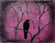 Corvus Brachyrhynchos Prints - Fuchsia Print by Gothicolors And Crows