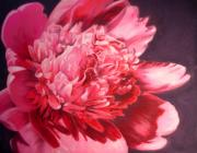 Botanical Pastels Originals - Full Bloom by Janice Lawrence