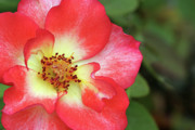 Jeannie Burleson - Full Bloom
