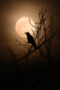 March 19 Prints - Full Crow SuperMoon Print by Shawna Dockery