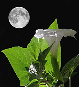 Night Angel Prints - Full Moon Flower Print by Angie Vogel