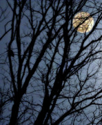 Spooky  Digital Art - Full Moon in Trees by Randy Steele