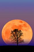 Larry Landolfi and Photo Researchers - Full Moon