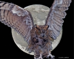 Great Horned Owl Framed Prints - Full Moon Framed Print by Larry Linton