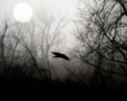 Corvus Brachyrhynchos Posters - Full Moon Light Poster by Gothicolors And Crows