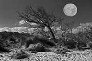 Dunes Prints - Full Moon over Jekyll Print by Debra and Dave Vanderlaan