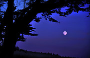 Tree Photos - Full Moon Rising Over Sea by Barbara Rich