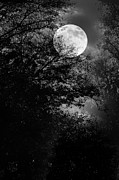 Whit Prints - Full Moon Print by Rozalia Toth