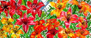 Crimson Lilies Prints - Full Picture Lilies Print by Nancy Rucker