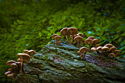 Smokey Mountains Prints - Fungi Forest Print by Ryan Heffron